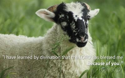January 29th: Bible Meditation for Genesis 30